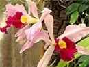 orhideju dārzs