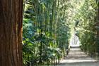 francija bambusu dārzs