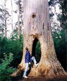 Bīdelupa Nacionālais parks, Austrālija