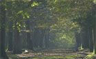 Rumbulē mežš